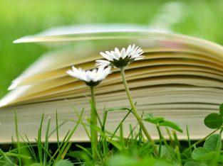 Nauczanie indywidualne, angielski, polski, histori